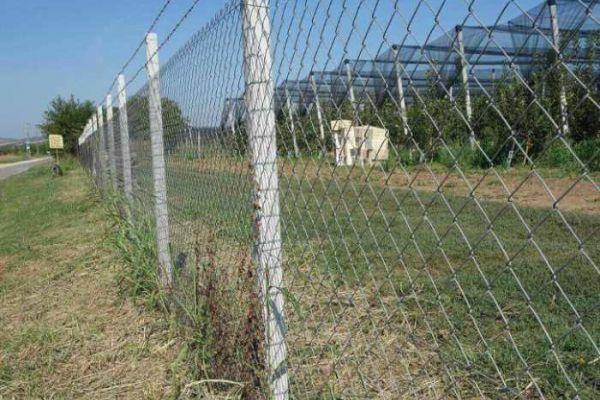 ograde-big-harvest-1AC3EE093-7E47-2B09-B1C5-3D9EBAEDA880.jpg