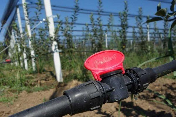 protivgradne-mreze-big-harvest-26F935DB11-100A-585D-E2F7-B0542A978FF7.jpg